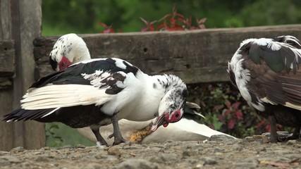 Birds, Animals, Wildlife, Nature