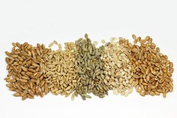 Getreide01