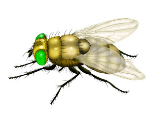 yellow fly white background