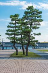 japanese tree in the yokohama park