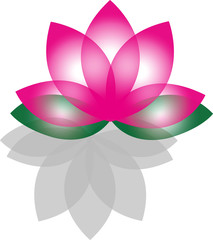 Lotus flowers silhouettes on white background
