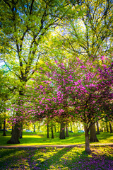 Colorful trees in Druid Hill Park, Baltimore, Maryland.