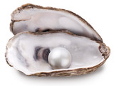 Oyster with pearl isolated.
