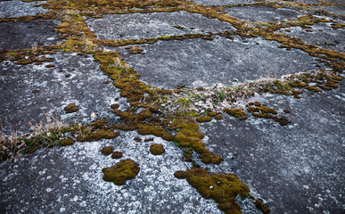 Old grey concrete pavement overgrown with moss