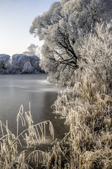 Trees and grass are in hoarfrost on the lake, covered with ice