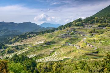 Rice Terraces in Kumano, Japan