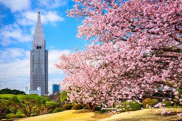 Tokyo, Japan at Shinjuku Gyoen Park in the Spring