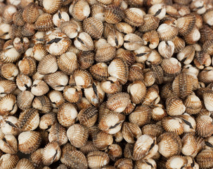 sea snails, background and texture