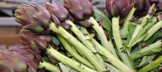 green artichokes for sale in stand of greengrocers to local mark