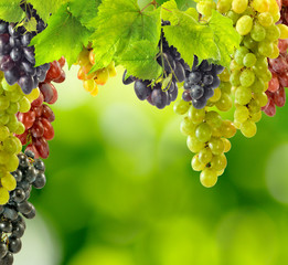 image of grapes on a green background closeup
