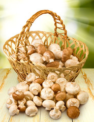 champignons in basket closeup