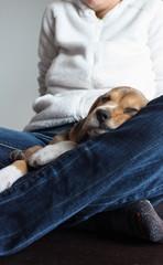 Beagle's Nap