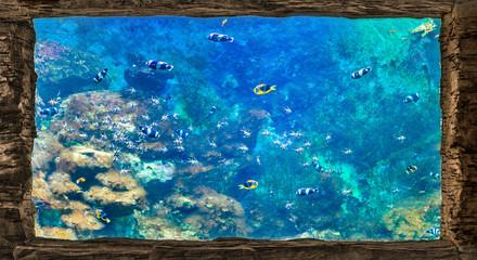 wild decorated aquarium