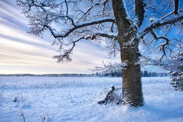 Tree in winter landscape