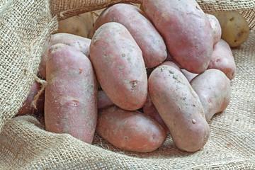 Pommes de terre rouges sur sac de toile