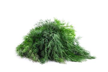 fresh dill herb