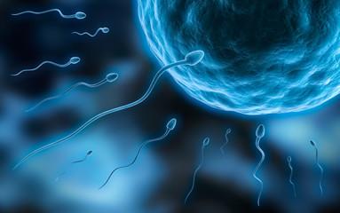 Eizelle und Spermien