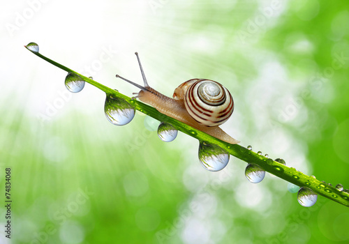 canvas print picture Snail on dewy grass close up