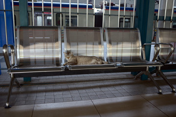 Cat on commuter train station