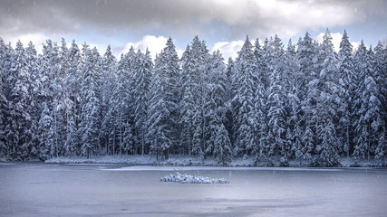 The effect of snow on winter forest photo