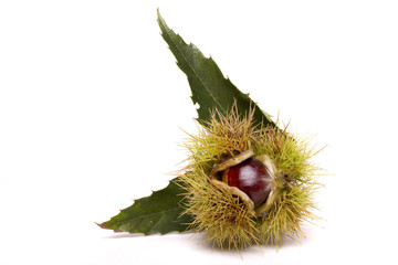 Close up view of chestnuts isolated on a white background.