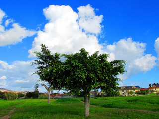 Landscape with trees,houses and blue sky with clouds