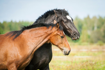 Portrait of two young horses on the pasture