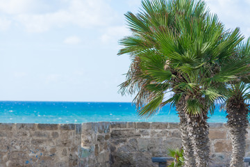 palm trees by Alghero turquoise shore