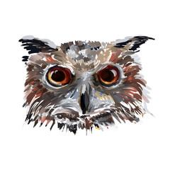Vector owl head