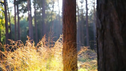 forest in autumn, sunny