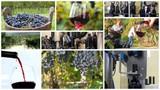 winemaking montage