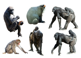 Set of gorillas and monkeys