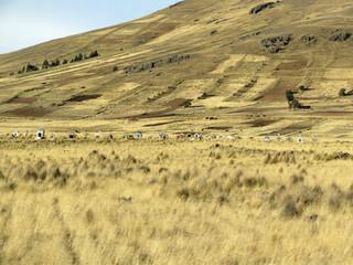 CHIRAPACA, Altiplano, Bolivie