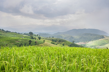 Beautiful green rice field terrace with rain cloud and mountain.