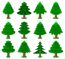 vector conifers with grass, coniferous trees