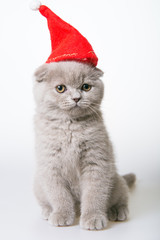 gray kitten in a red hat on a white background,