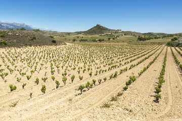Vineyards at La Rioja (Spain)