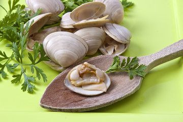clams with parsley on green dish