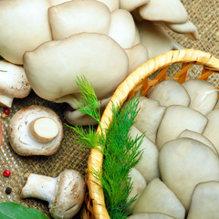Oyster mushrooms, champignon mushrooms, green dill and pepper on