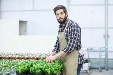 Male florist working indoors