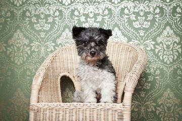 kleiner Hund im Stuhl