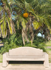 Stone bench under a date palm tree
