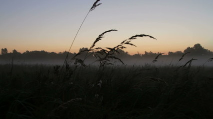 rye at sunrise