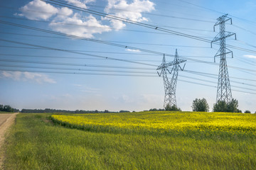 Power line and canola field