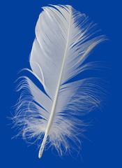 White Feather Cutout