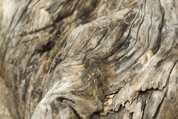 old wood brown background texture