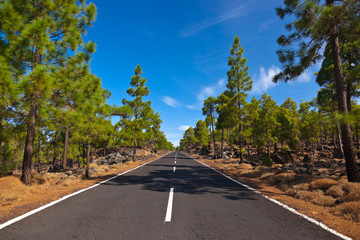 Road to volcano Teide at Tenerife island - Canary