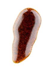 Vanilla bean pods in liquid isolated on white