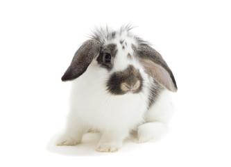 bunny on a blanket