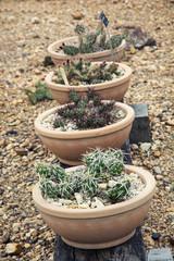 Beautiful various cacti